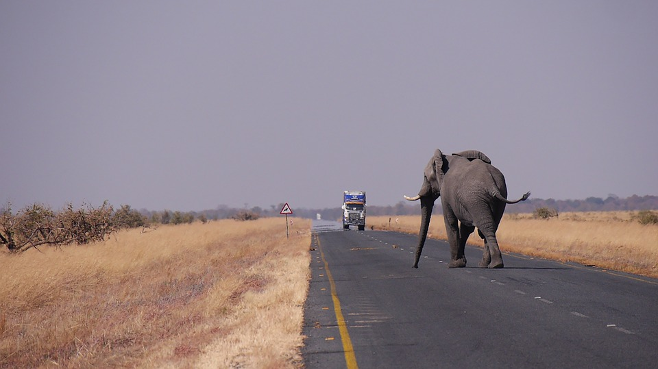A rough guide to Botswana's Green Season | Drive South Africa